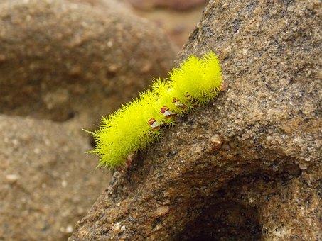 Sponge, Mar, Nature, Deep Sea, Beach, Sand, Water