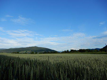 Sky, Blue, Cereals, Landscape