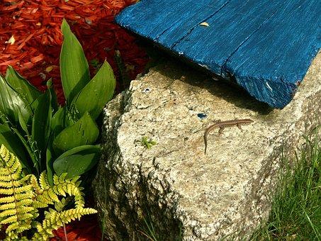 Geometry, Animal, Wild, Nature, Shape, Creative, Lizard