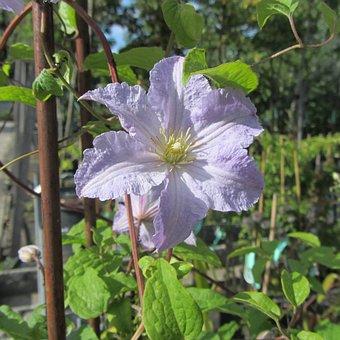 Flower, Spring, Purple Flower, Nature, Bloom, Hibiscus
