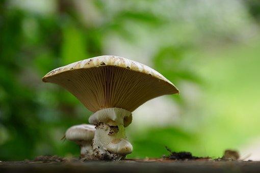 Fungus, Forest, Stump, Tree, Mushrooms, Nature
