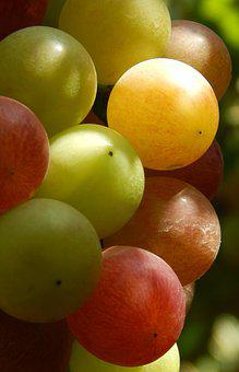 Grape, Fruit, Natural, Healthy, Red, Juicy, Nutrition