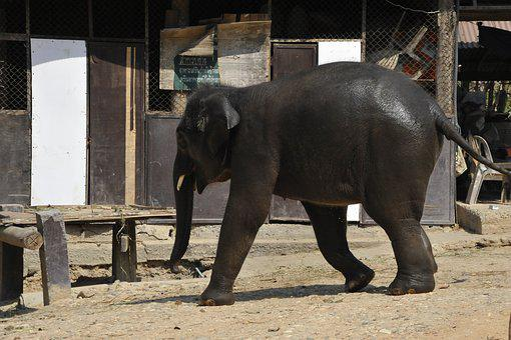 Thailand, Elephant, Nature, Animals, Animal, Reserve