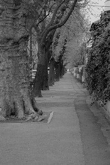 Street, Trees, Solitude