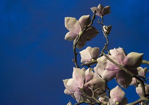 Flowers, Sculpture, Art, Design, Statue, Craft