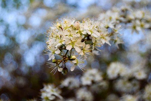 Nature, Flowers, Spring, Summer, Floral, Bloom, Easter
