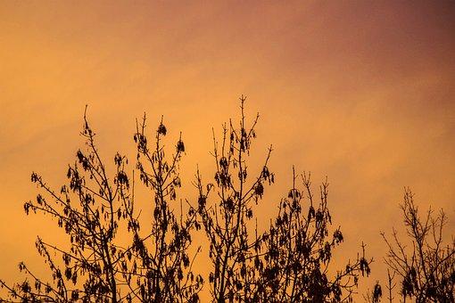 Sunset, Sunrise, Red, Sun, Beach, Holiday, Sky, Clouds