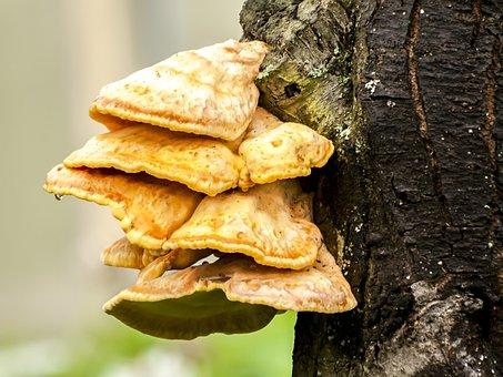 Tree Fungus, Mushroom, Log, Nature