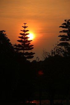 Sun, Sunset, Twilight, Silhouette, Plant