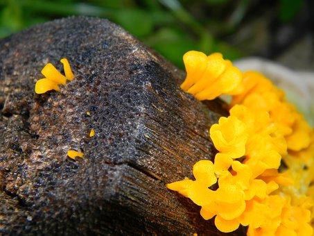 Fungi, Mushroom, Food, Fresh, Fungus, Nature, Yellow