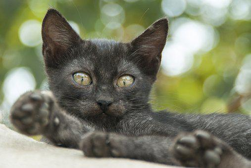 Cat, Eye, Green, Animal Portrait, Animal, Baby Animal