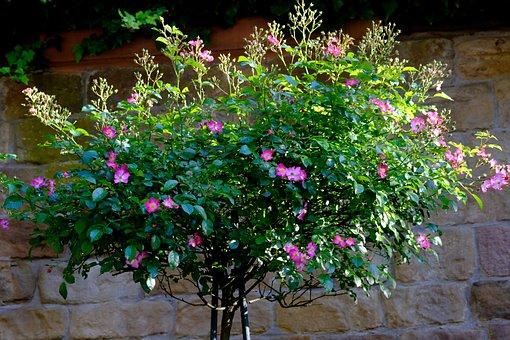 Flowers, Arrangement, Deco, Flora, Decoration