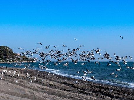 Seagulls, Sea, Beach, Fly, Mediterranean, Bird, Freedom