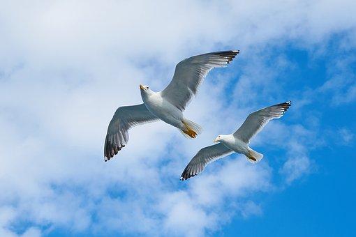 Seagull, Bird, Gulls, Sky, Animal, Freedom, Day, Birds