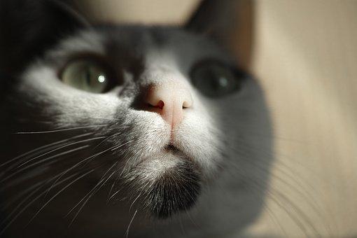 Cat, Eye, Animal Portrait, Animal, Baby Animal, Animals