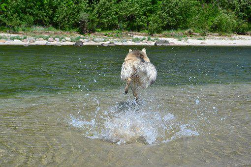 Dog, Water, Most Beach, Pet, Mixed Breed Dog