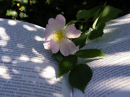 Summer, Hip, Book, Darts, Flower, Shadow, Sun, Colors