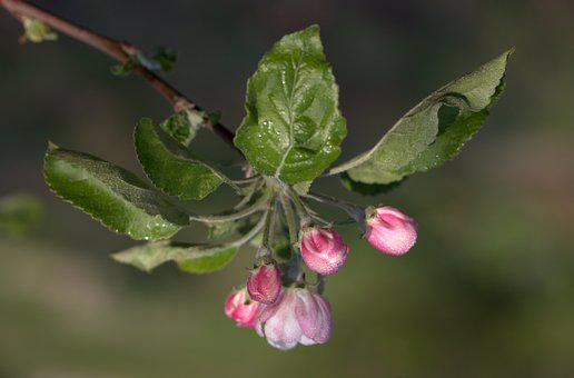 Flower, March, Spring, Petals, Bud
