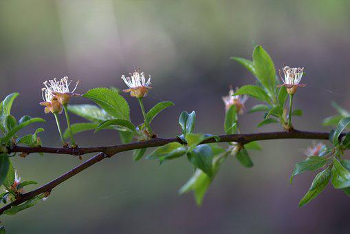 Flower, March, Spring, Petals, Bud