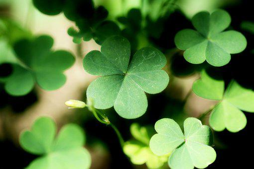 Shamrock, Clover, Forest, Nature, Plants, Green, Leaf