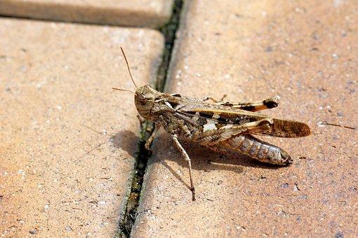 Toad The Domain Grasshopper, Invoice-grasshopper