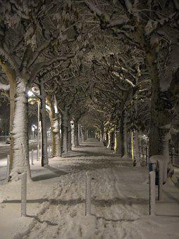 Winter, Snow, White, Wintry, Snowy, Tree, Frankfurt