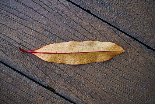 Leaves, Wood, Autumn, Wood-fibre Boards, Table, Plant