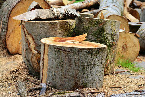 Log, Wood, Wood Beat, Cut Tree, Tree Trunks, Like