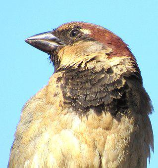 Sparrow, Bird, Nature, City, Zoom