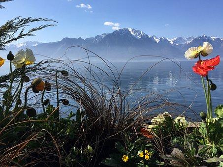 Nature, Water, Switzerland, Environment, Liquid