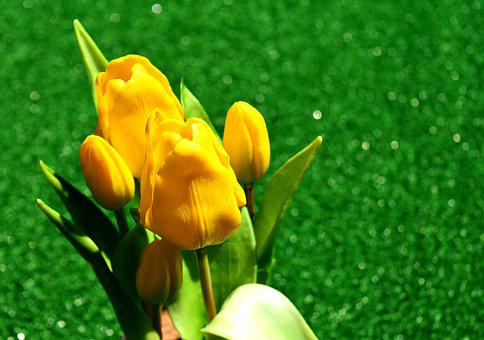 Tulips, Yellow, Flowers, Spring Flower, Spring