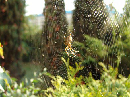 Spider, Hotel, Insect, Spider's Web, Nature, Macro