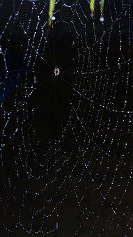 Misty, Web, Misty Web, Spider, Spider Web, Nature