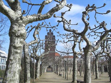 Plane Trees, Wedding Storm, Mathildenhöhe, Darmstadt