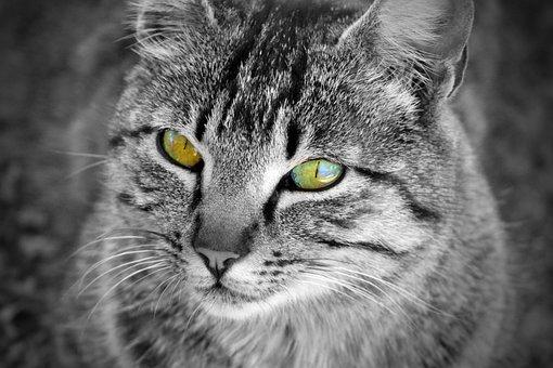 Cat, Eyes, Whiskers, Cat Home, Feline, Pet, Animals