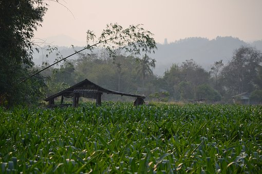 Thailand, Field, Nature, Landscape, Asia, Agriculture