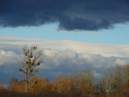 Deciduous, Tree, Sky
