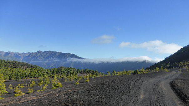 Volcanic Landscape, Palma, Canary Islands, Ash, Trees