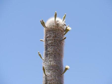 Cactus, Cardon, Cactus Greenhouse, Thorns, Plant, Flora