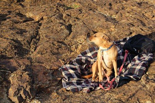 Dog, Rock, Sun, Animal, Pet, Nature, Outdoor, Cute