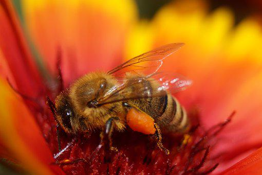 Flower, Bee, Insect, Blossom, Bloom, Macro, Nature