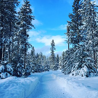 Winter, Snow, Trees, Nature, Cold, Blue, Frost, White