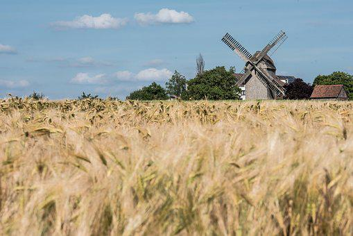Summer, Field, Nature, Cereals, Landscape, Fields