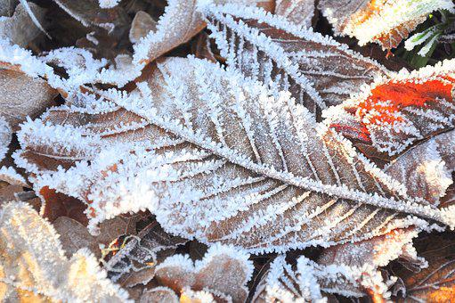 Frost, Cold, Leaf, Leaves, Winter, White, Blue, Ice
