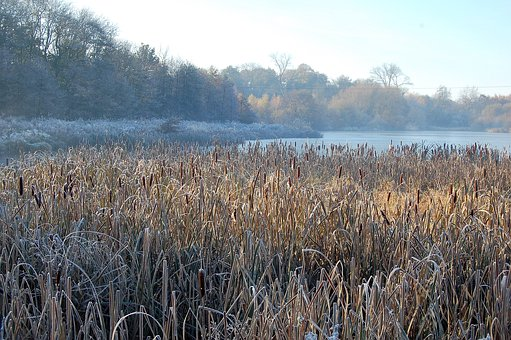 Winter, Lake, Frost, Landscape, Nature, Ice, Frozen