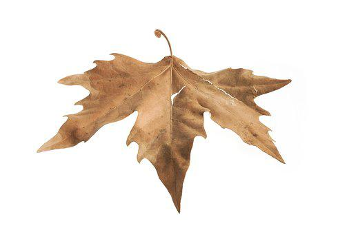 Leaves, Autumn, Season, Withered Leaves, The Leaves Are