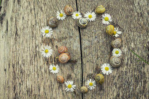 The Background, Heart, Snail, Snails, Daisies