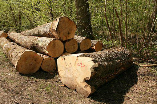 Timber Industry, Wood, Tree Trunks, Forestry
