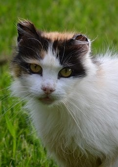 Cat, Barn Cat, Calico Cat, Calico, Barn, Feline, Black