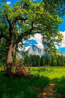 Half Dome, Yosemite, California, Dome, Park, Valley